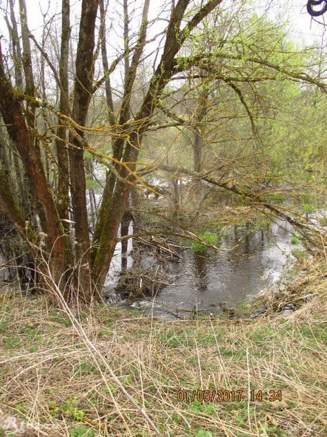 плотина бобров на мелкой речке огородня