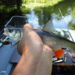Сплав по небольшой реке 15 км. Ловля щуки и голавля спиннингом
