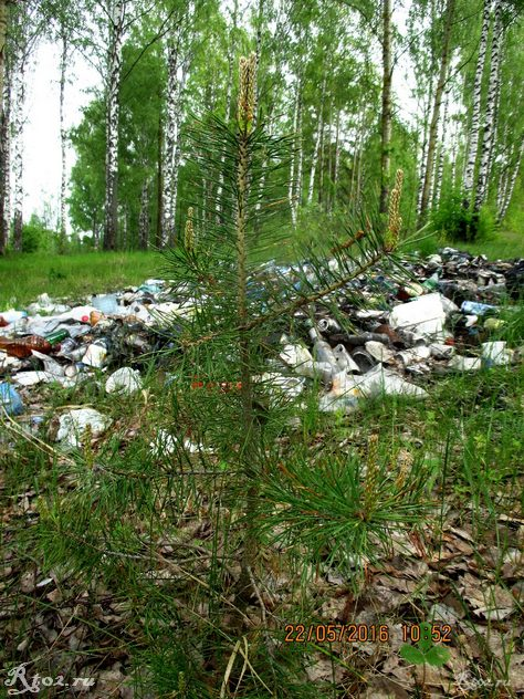 маленькая сосна растет около горы мусора