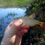 Ловля белой рыбы поплавочной удочкой на озере в конце апреля