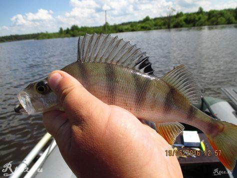 небольшой окунек на озере 325