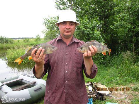 самый крупные окуни этой рыбалки