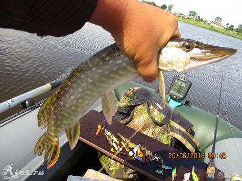 щучка на озере летом 43