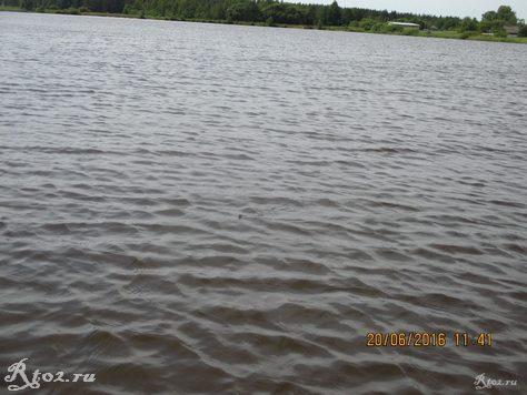 ужик в воде 1