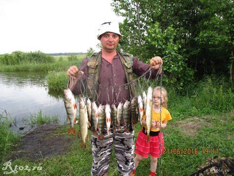 улов щук и окуней летом на озере