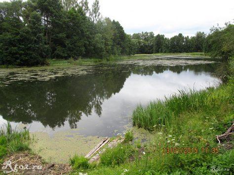 заросшее озеро 56