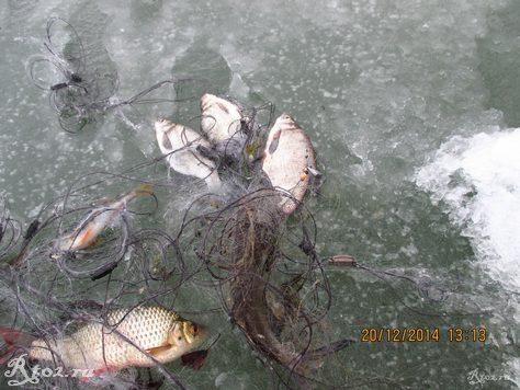 рыба в куске сетки 2