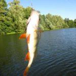 Небольшой отдых или вечерняя ловля окуня на озере