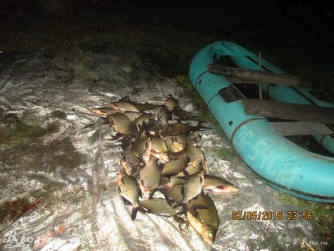 подсчет рыбывыловленной сетями 4