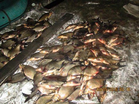подсчет рыбывыловленной сетями 7