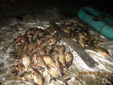 подсчет рыбывыловленной сетями 8