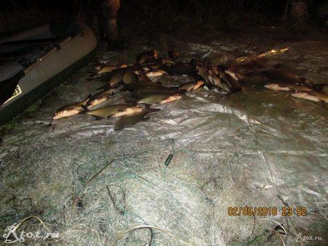 подсчет рыбывыловленной сетями 2