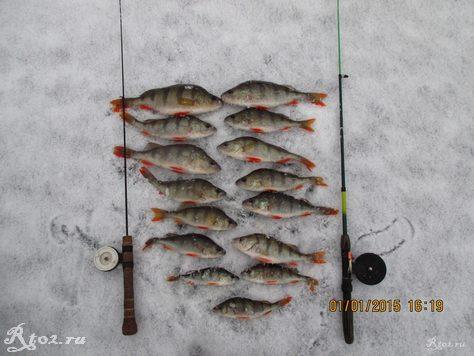 улов окуней зимой на озере на балду и балансир 346