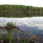 Десногорское водохранилище. В Шмаково за уклейкой и отдыхом.