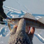 Десногорское водохранилище. В Стряны в поисках хищника.