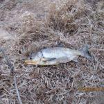 Десногорское водохранилище: открытие жидкой воды 2015