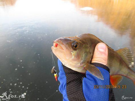 окунь на озере на балду 48