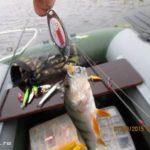 Выезд на рыбалку с Толянычем