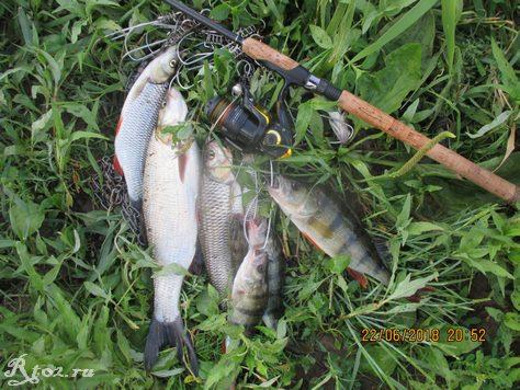 улов рыбы на Днепре 4356
