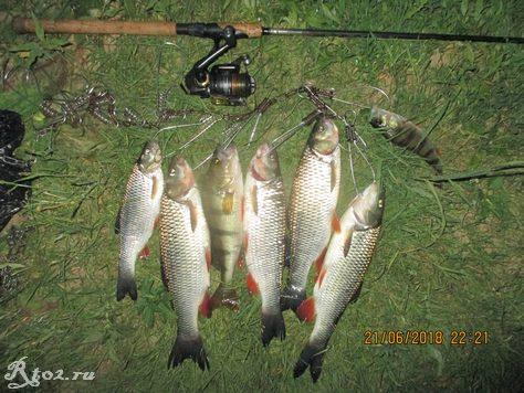улов голавля на реке Днепр 345