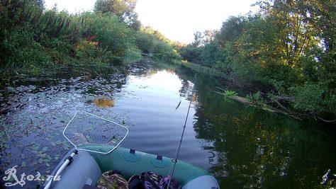 заросшая река 43535