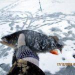 Ловля хищника на выходе колпинской заводи Десногорского водохранилища. День второй
