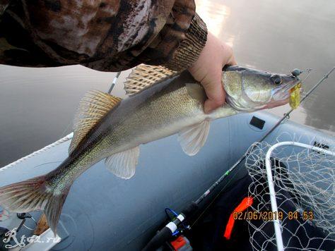 судак на копии рака спрут асаки от Walk Fish