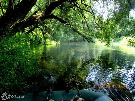 Дерево на речке