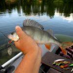 День рыбака 2019 или ловля окуня и судака китайскими силиконовыми приманками на Десногорском водохранилище