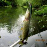 Ловля щуки спиннингом на мелкой реке в начале июля 2019