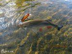 Видео о рыбалке на реке со спиннингом на голавля и щуку