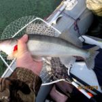 Выезд на рыбалку на Десногорское водохранилище 20 октября 2019