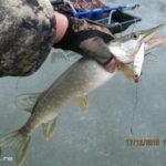 Список китайских вибов (VIB) с Aliexpress, которые действительно ловят рыбу зимой