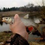 Первая рыбалка с поплавочной удочкой в 2020 году на Днепре