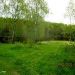 Выезд на рыбалку за уклейкой в Шмаково в конце мая 2020