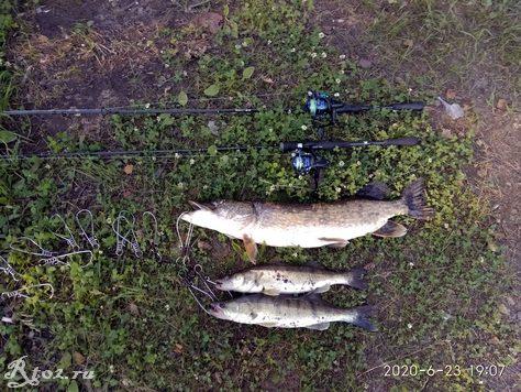 Мой улов на Десногорском водохранилище 23 июня 2020