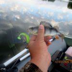 Ловля судака джигом на Десногорском водохранилище в середине июля 2020