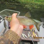 Ловля хищника спиннингом на малой реке 9 августа 2020
