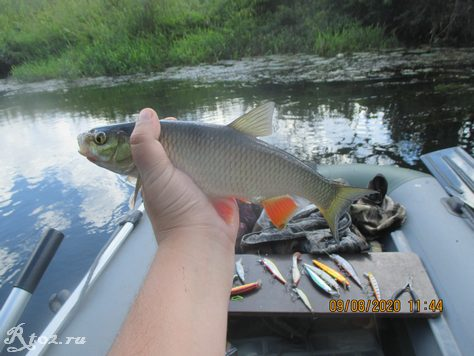 Второй голавлик на рыбалке 9 августа 2020
