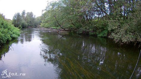 Трава в воде на реке в сентябре