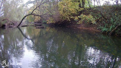 Река 4 октября 2020. Голавлей на перекате нет