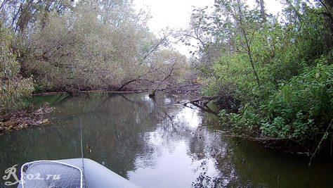 Деревья в воде 4 октября 2020