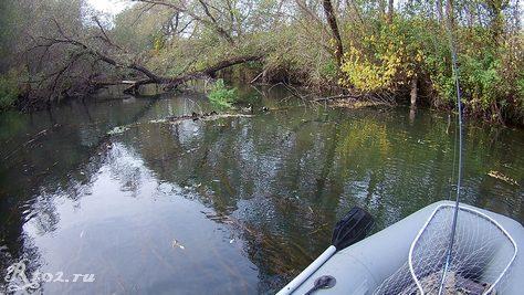 Поваленные деревья в реке 4 октября 2020 года