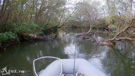 поваленное в реке дерево