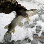 Ловля щуки балансирами на озере 20 декабря 2020