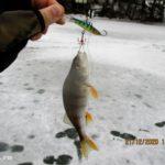 Отчет о рыбалке 21 декабря 2020. Поиск хищника на новом озере