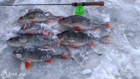 Промежуточный итог рыбалки 10 января 2021 года