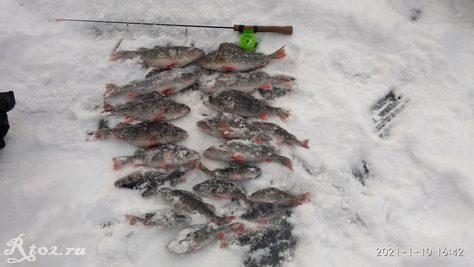 Итог рыблаки на соложе 10 января 2021 года