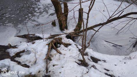 Следы браконьерской деятельности 3