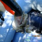 Ловля щуки спиннингом на копию Zipbaits Orbit 80 от BearKing на малой реке